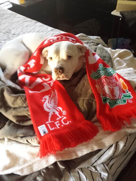 dogscarf